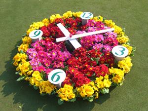 flower (92)